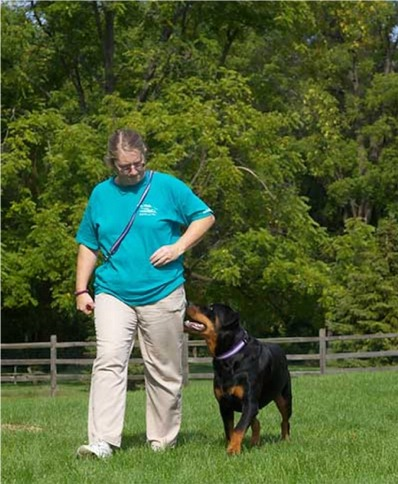 rottweiler training More Rottweiler Training Advice